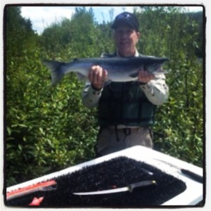 Nice Russian River Sockeye , that got stung and filleted on the Kenai River. Great work Gary.